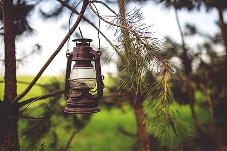 gas lamp hanging on tree stem