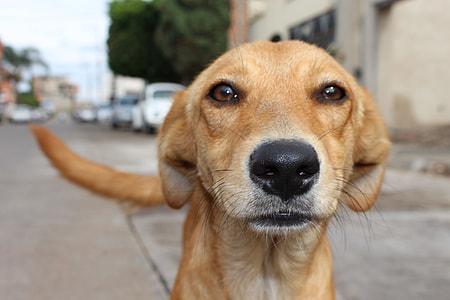 short-coated brown dog macro photography