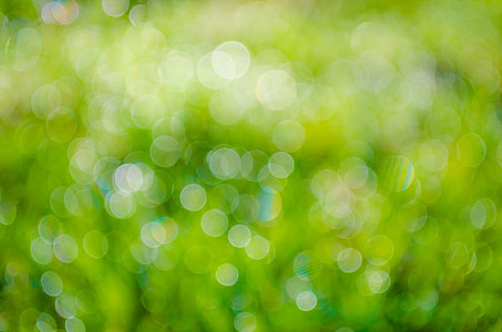 green, bokeh, photography, background, abstract, plant