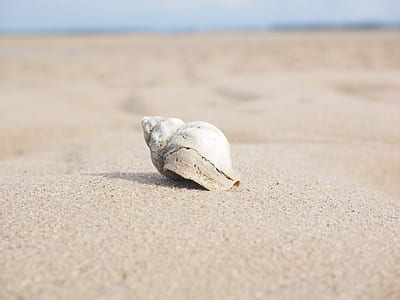 selective focus photographed of white shell on sand