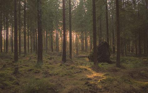 stone under trees