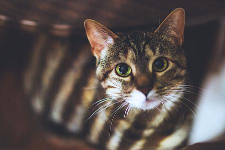 Closeup shot of a house cat
