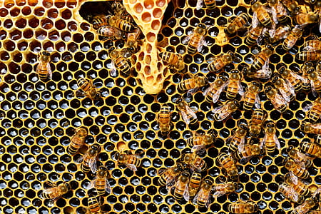 Top View of Bees Putting Honey