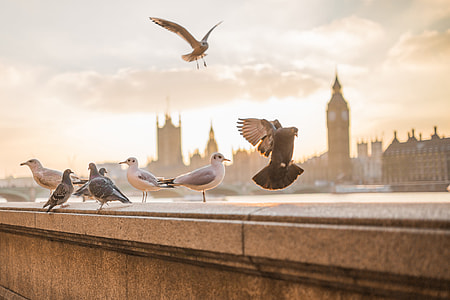 Flying Birds in London