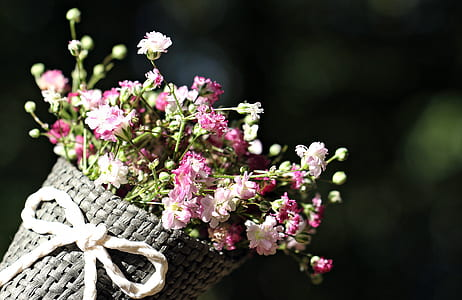 pink and white flowers on bouquet during daytime