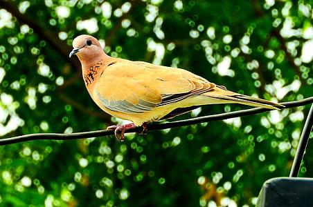 short-beak yellow bird selective focus photography