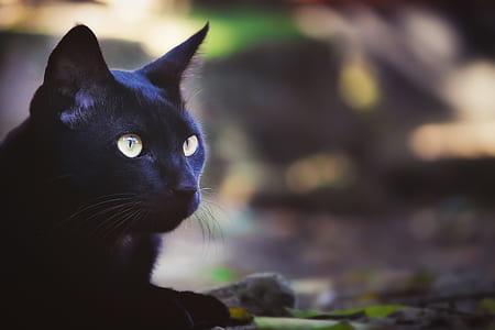 tilt shift lens photography of black cat during daytime