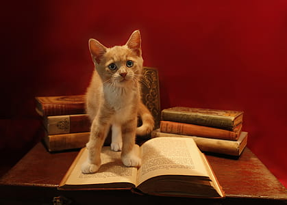 orange tabby cat on top of book on table