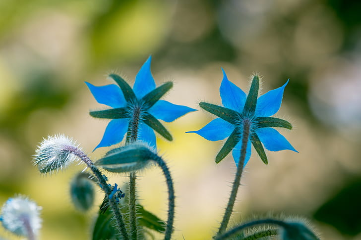 macro shot photography of blue rose