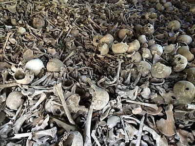 gray bone lot