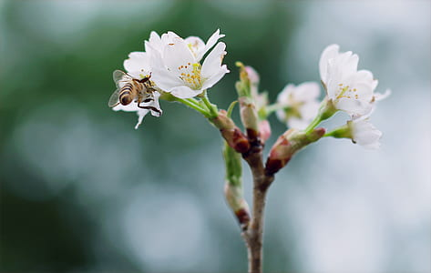 White Clustered Flowers With Bee On Top