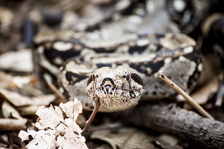 Photography of Gray and Brown Snake
