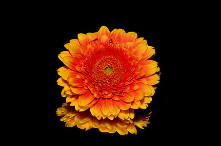 yellow and orange cluster flower