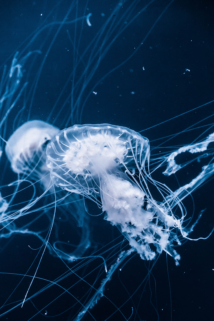 photography of jelly fish under sea
