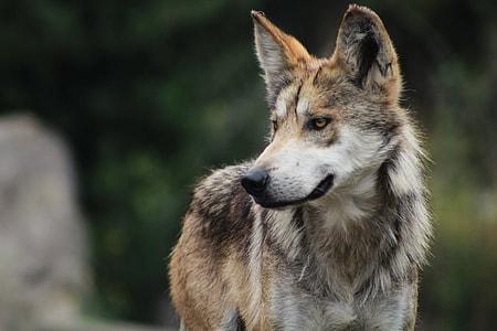 vlcak dog closeup photography