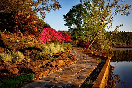 brown pathway near body of water