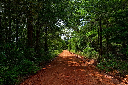 brown muddy roadway surrounded by trees photograph