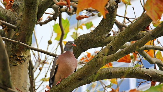 brown and grey pigeon perched on tree branch during daytime