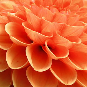 macro photo of orange flower