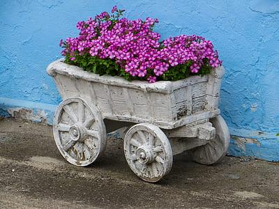 carriage of purple petaled flower