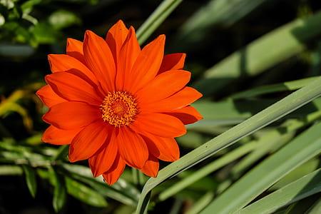 orange flowering plant