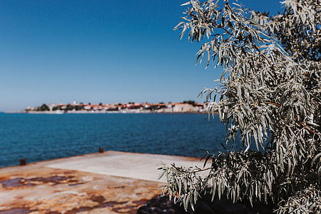 Close up of tree, Nessebar, Black Sea, Bulgaria