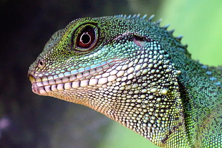 green reptile focus photographt