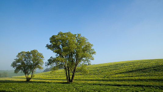two green trees on green grassy hill under blue skies