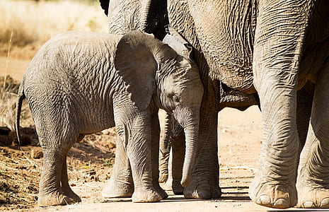 elephant cab
