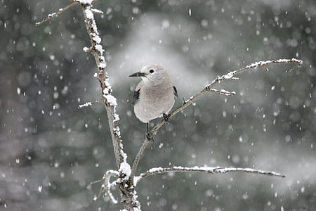 small gray bird perched on the tree during winter