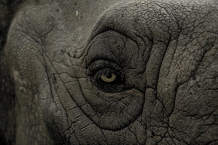 closeup photo of elephant eye