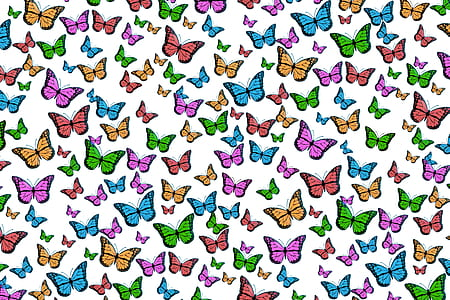 multicolored butterfly print