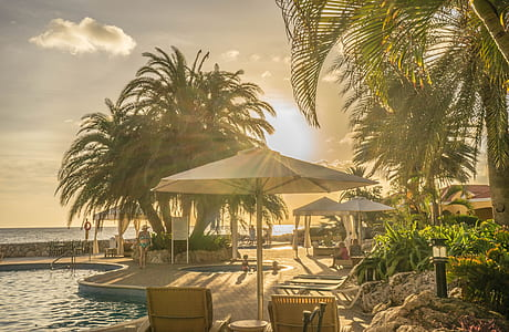 patio umbrella near coconut tree