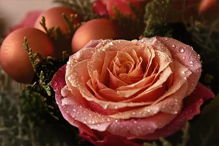macroshot photography flower