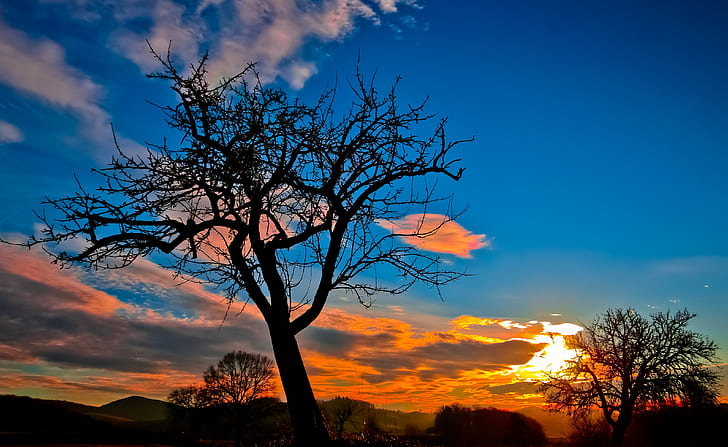bare tree under cloudy sky