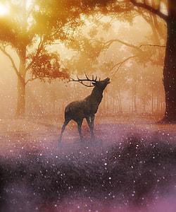 brown deer painting