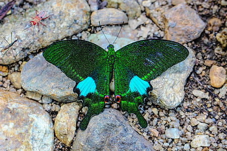 green butterfly on brown stones