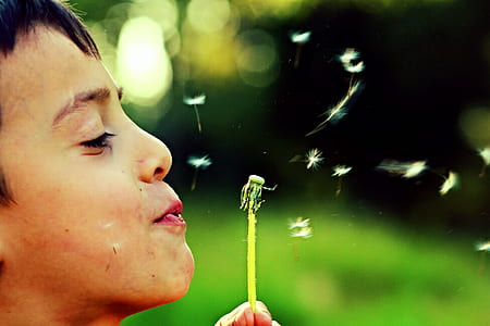 person blowing dandelion flower