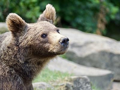 selective focus photography of sun bear