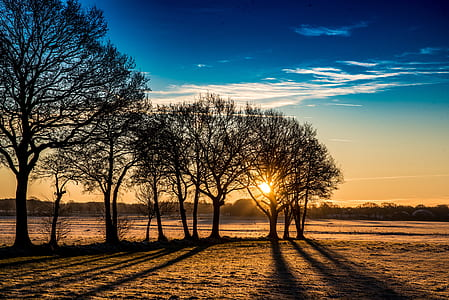 silhouette photo of trees on field during golden hour