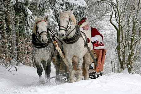 Santa Claus riding sleigh with two white horses beside brown bare trees during daytime