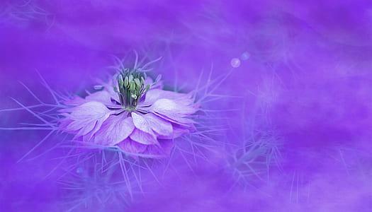 purple and green lotus flower wallpaper