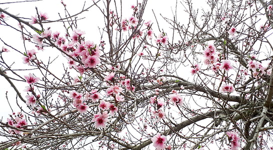 pink-and-white flowers tree