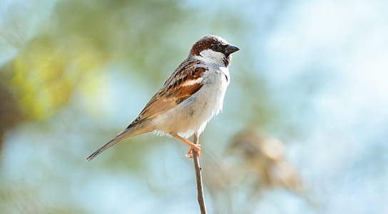 brown and white feather bird
