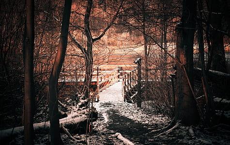 brown wooden bridge near woods