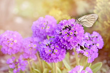 purple flowers with gray butterfly on top