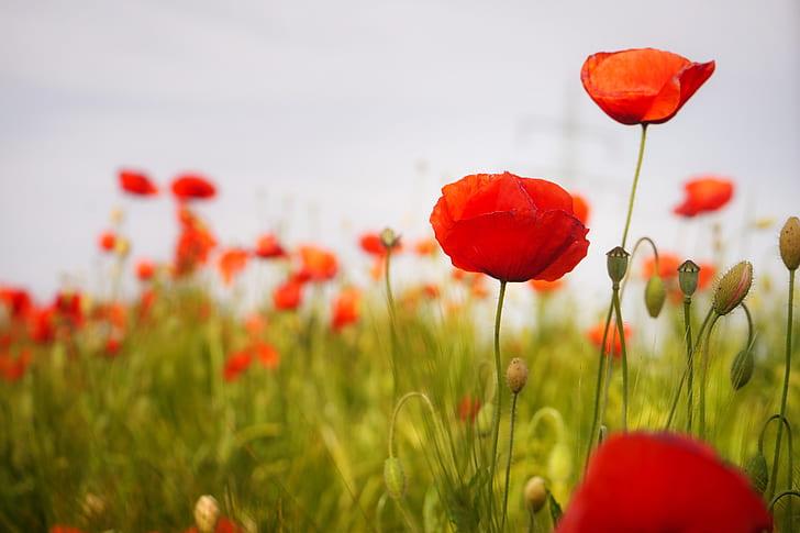 red petal flowers