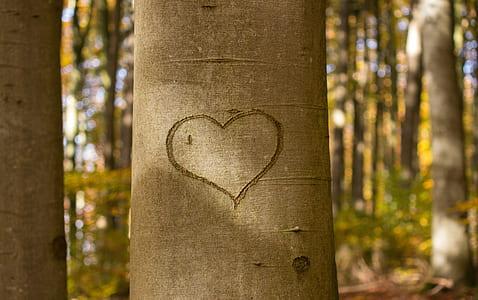 heart engraved on tree trunk