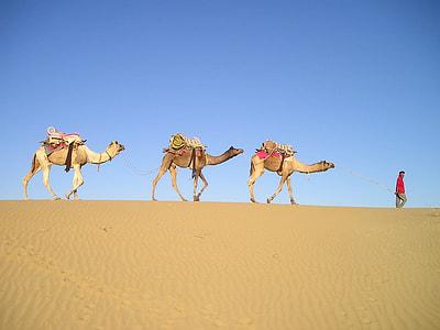 three camels on desert