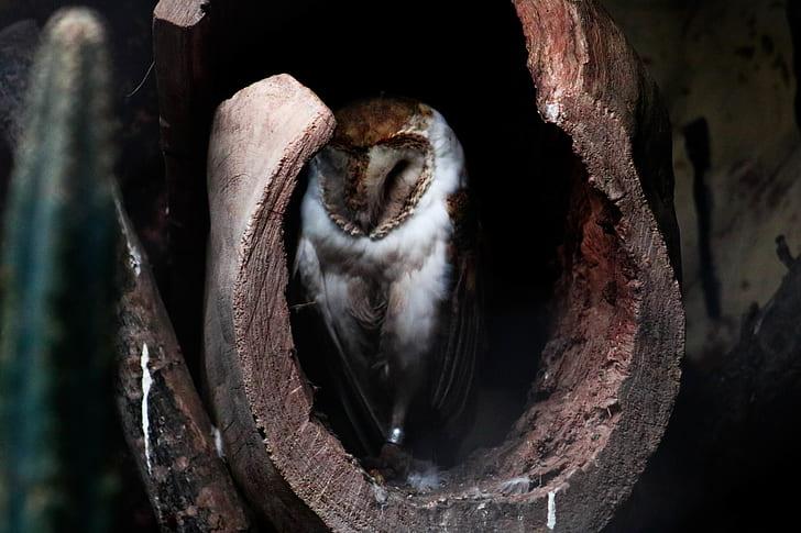 wildlife photography of owl on tree hole